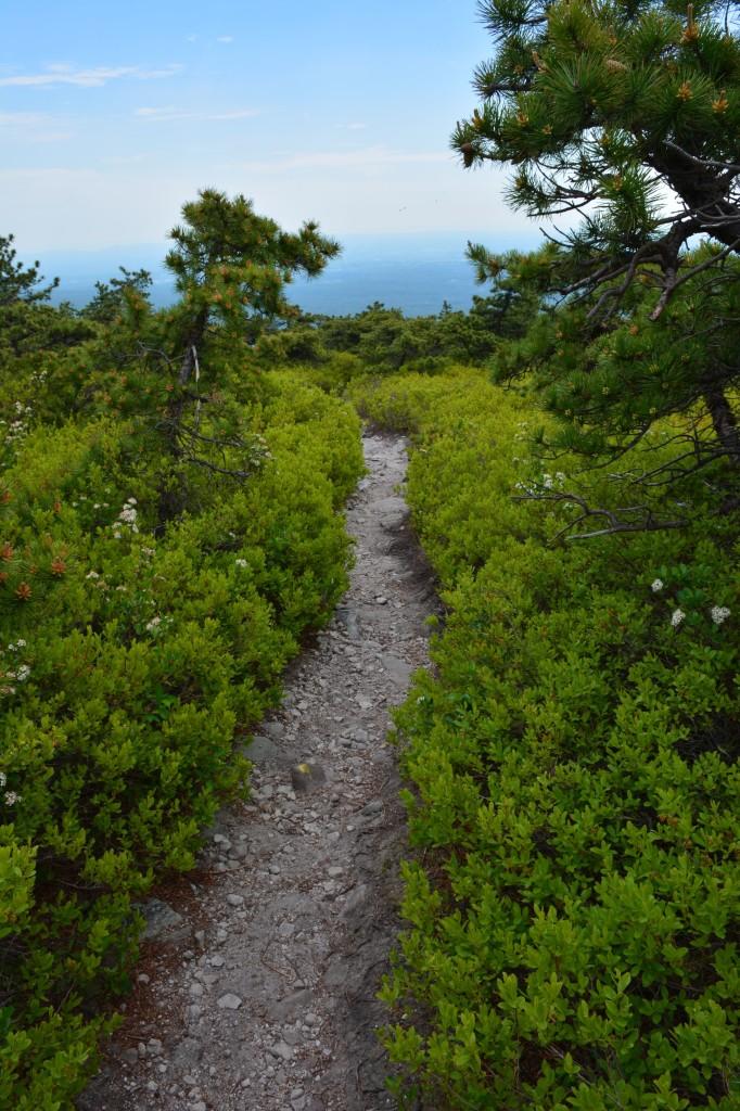 Pathway through