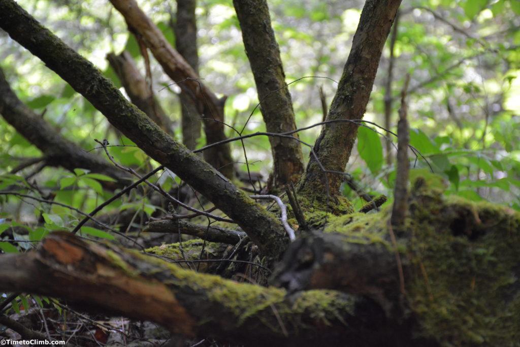 Moss on dead tree in Natural Bridge