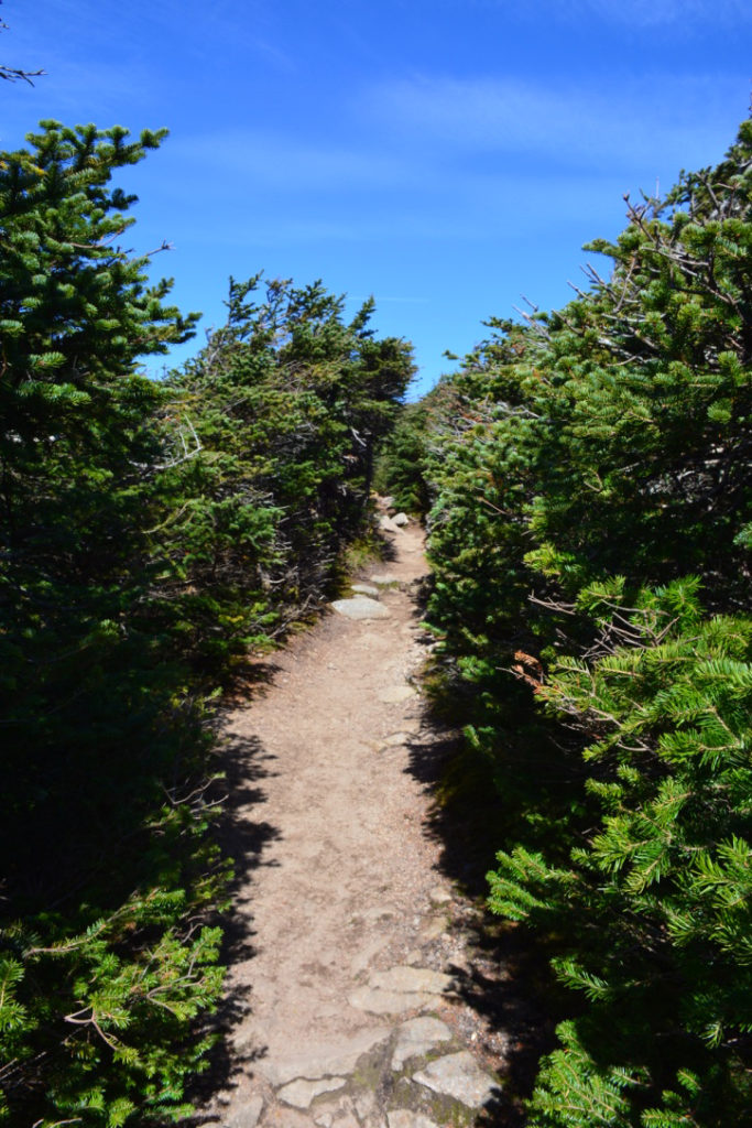 The pathway that cuts through the conifers on the way to Mount Lafayette's summit.